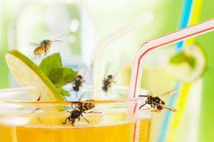Insektenstiche: Tipps für natürlichen Schutz