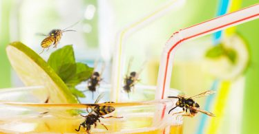 Trauerm cken kleine fliegen in blumenerde erfolgreich for Kleine fliegen an zimmerpflanzen