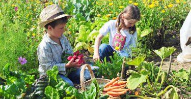 Mit Kindern gärtnern: Ideen für Wohnung, Balkon oder Garten