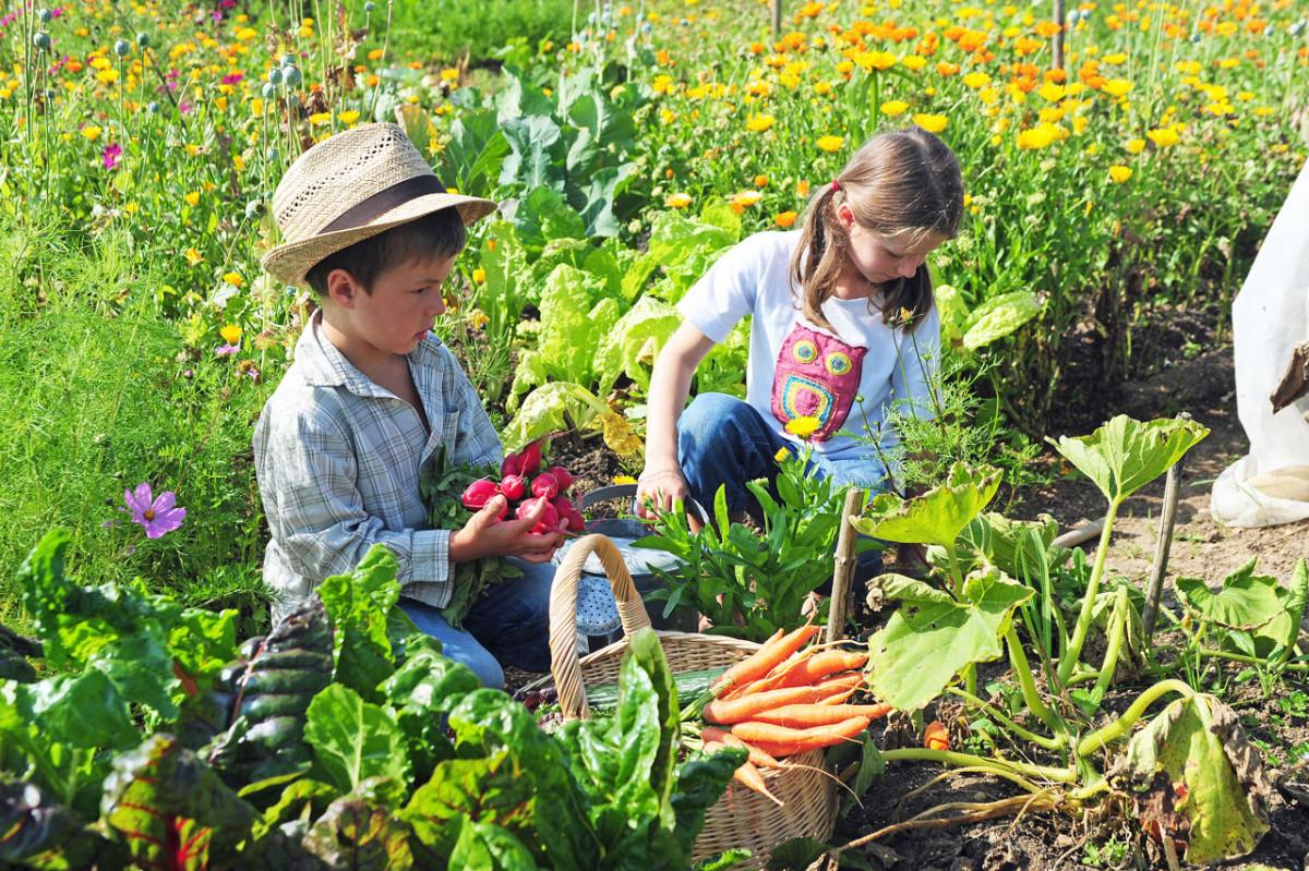 Mit Kindern Gärtnern: Ideen Für Wohnung, Balkon Oder