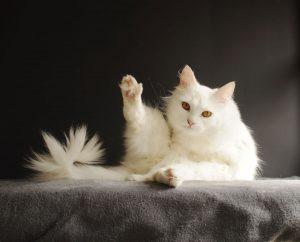 Causticum gegen Nerven- und Muskelerkrankungen der Katze