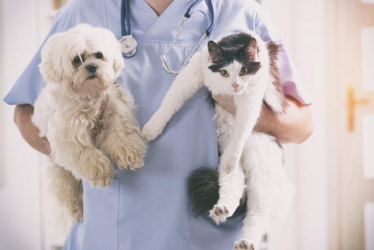 Homöopathische Behandlung einer Brustentzündung bei Katze und Hund