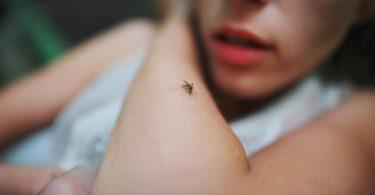 Mückenabwehr – wie kann ich mich mit natürlichen Mitteln wehren?