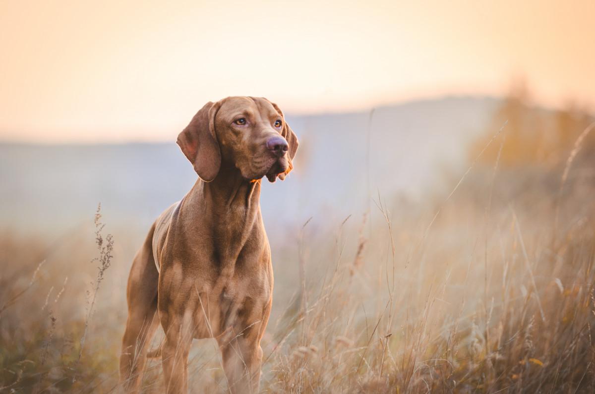 Durchblutungsstörungen beim Hund homöopathisch behandeln