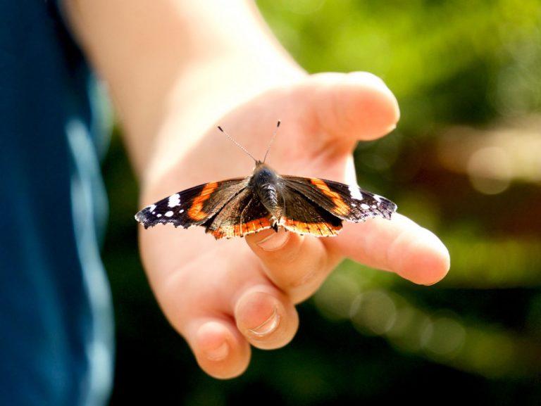 Schmetterlinge helfen bei der Trauerarbeit mit Kindern