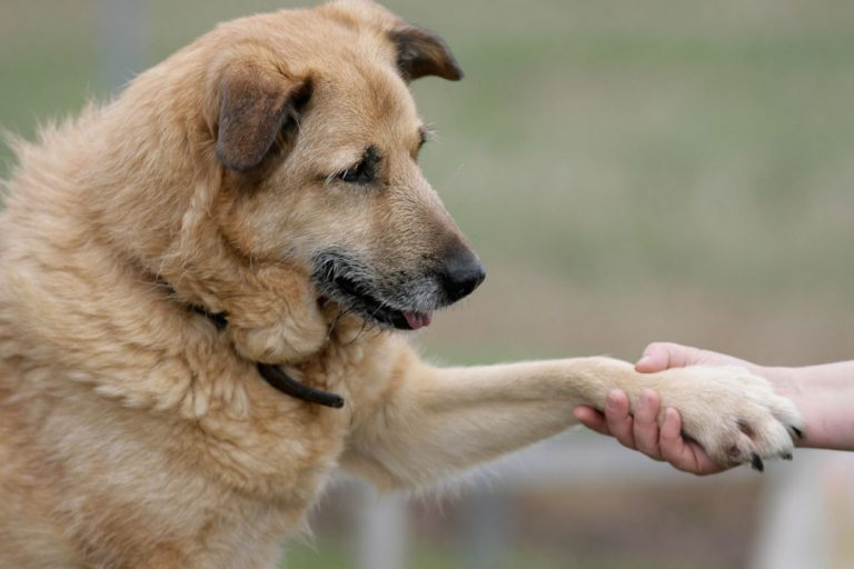 Rheuma beim Hund mit Homöopathie behandeln