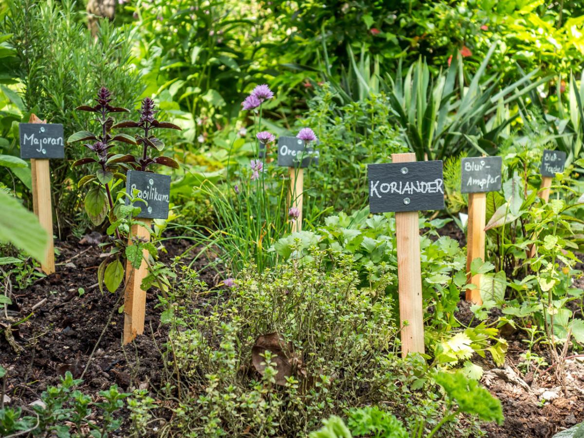 Kräuter und Gemüse sind die besten Nachbarn - so geht's