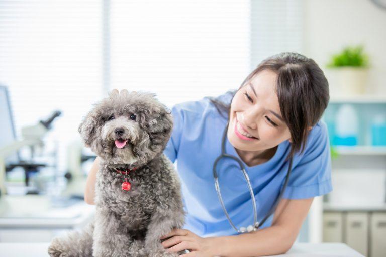 Homöopathische Mittel für die Halswirbelsäule beim Hund