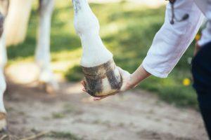 Strahlfäule beim Pferd homöopathisch begleiten