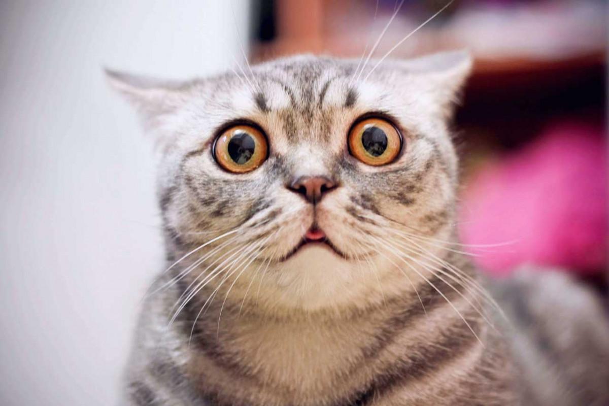 Verhaltensstörungen bei Katzen mit Homöopathie behandeln