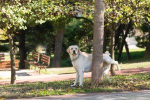 Dulcamara bei Harnwegserkrankungen durch Nässe bei Hunden einsetzen