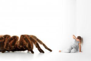 Spinnenphobie: Wie Sie Ihre Ängste in den Griff bekommen
