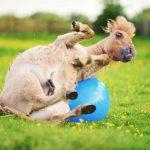 Rücken- und Wirbelsäulenprobleme beim Pferd – Homöopathie kann helfen
