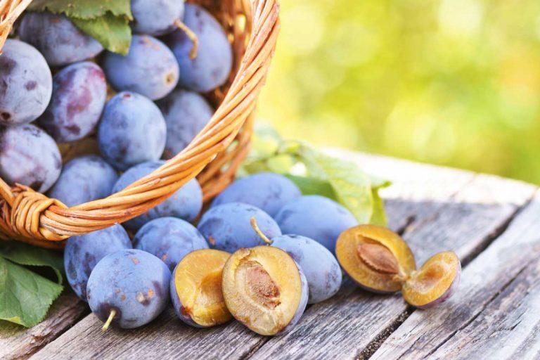 Pflaumen oder Zwetschgen: Was Sie über das Obst wissen sollten