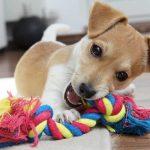 Zahnwechsel beim Hund – Homöopathie hilft gegen Schmerzen