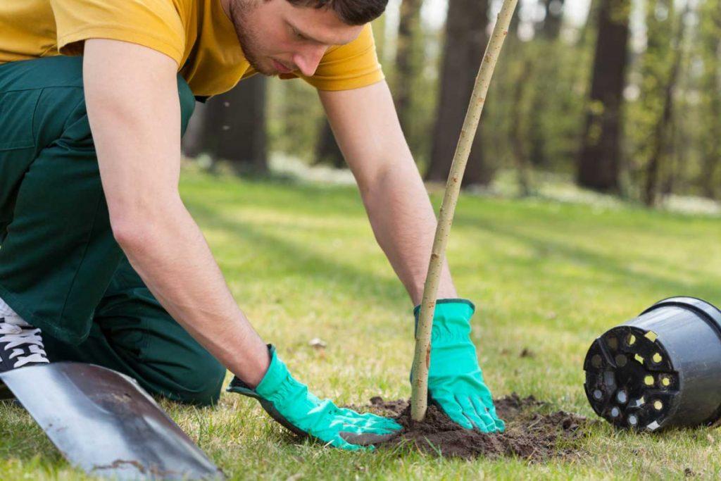 Außergewöhnlich Es ist Pflanzzeit: So binden Sie ihre jungen Bäume richtig an &NL_59