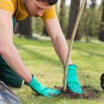 Es ist Pflanzzeit: So binden Sie ihre jungen Bäume richtig an
