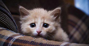 So verwenden Sie Natrium muriaticum bei Katzen mit Verlustängsten