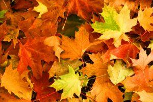 Herbst – Basteln Sie eine Blätterpresse