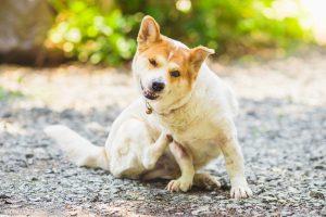 Hautprobleme beim Hund homöopathisch behandeln
