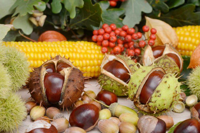 Originelle Herbstdeko: Windlicht mit Früchten