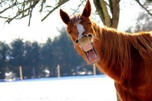 Kranke Hufe beim Pferd mit Homöopathie behandeln