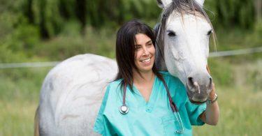 Nierenerkrankungen beim Pferd homöopathisch behandeln