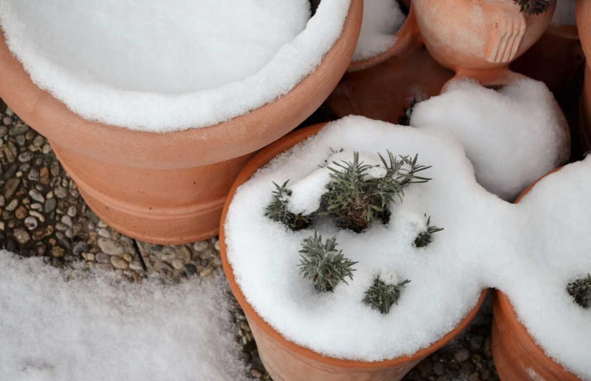 Kübelpflanzen: Tipps zum Überwintern