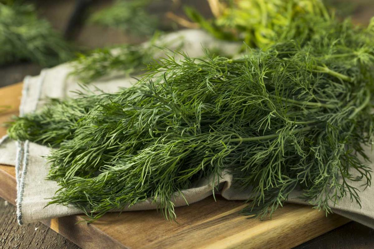 Rezepte mit Dill: Eine gesunde und leckere Küche!
