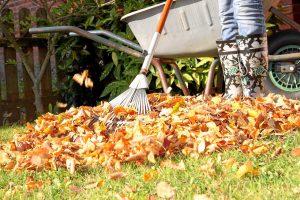 Herbstlaub: Wohin nur mit den Blättermassen?