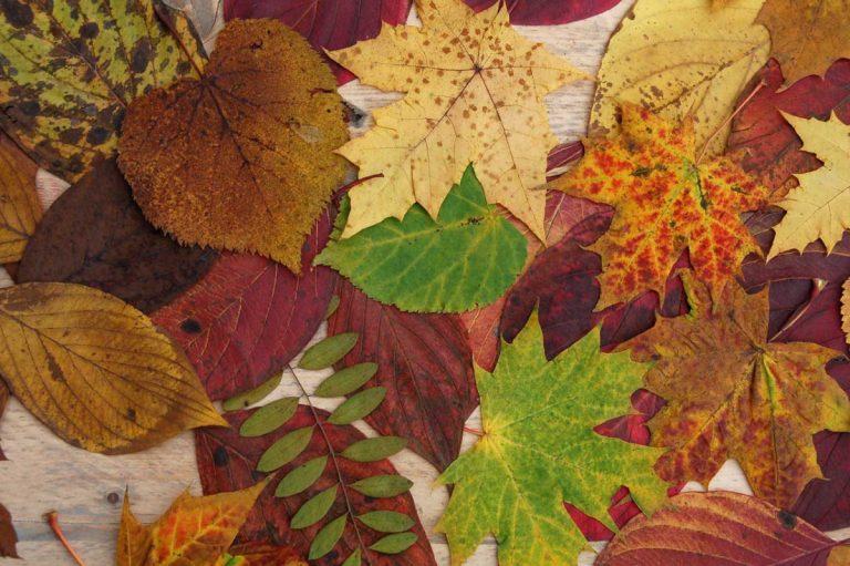 Kindergeburtstag im Herbst: Blätterpresse basteln
