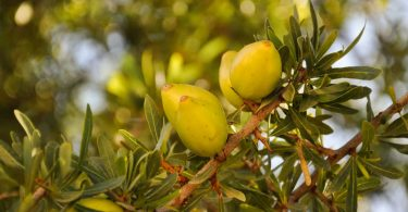 Ist Arganöl als Kosmetiköl zu empfehlen?