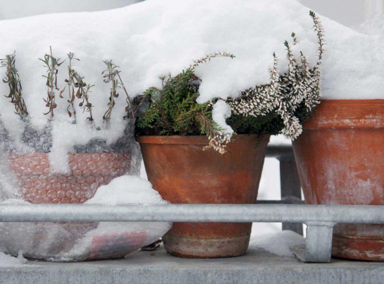 Ruhe bitte! Warum brauchen Pflanzen eigentlich eine Ruhezeit im Winter?