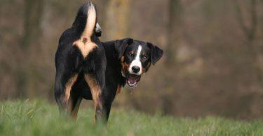 Homöopathie für Hunde bei Blähungen