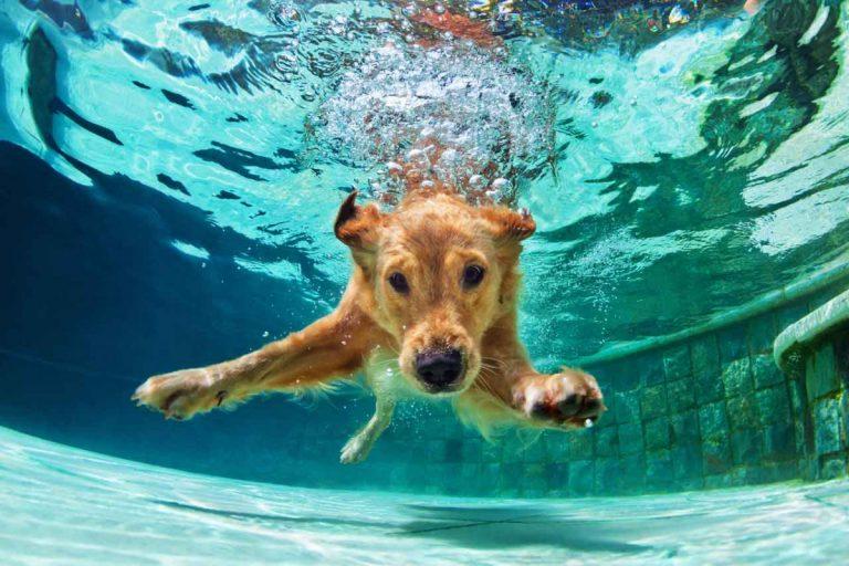 Entwässerung - so helfen homöopathische Mittel Ihrem Hund