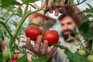 Prostatakrebs mit den richtigen Lebensmitteln vorbeugen