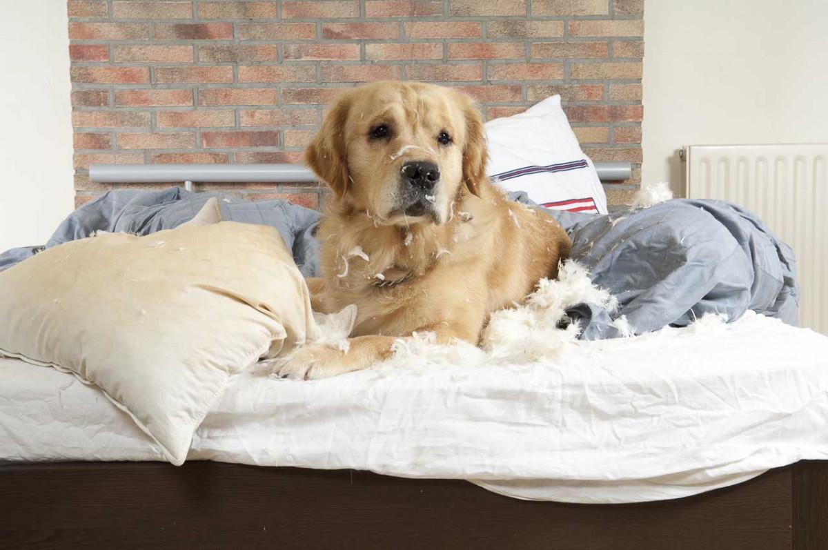 Dominanz bei Hunden homöopathisch regulieren