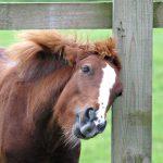 Ekzeme beim Pferd homöopathisch behandeln