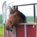 Ignatia für Pferde bei Trennungsschmerz wegen Umzugs