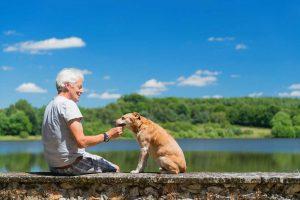 Nutzen Sie Viscum album für Hunde mit Schmerzen in den Gelenken