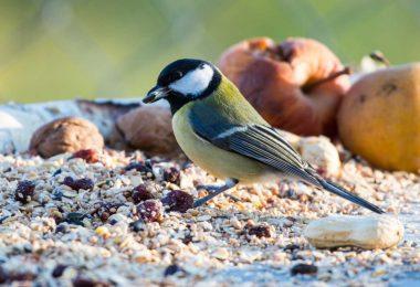 Was man beim Vögel füttern beachten sollte
