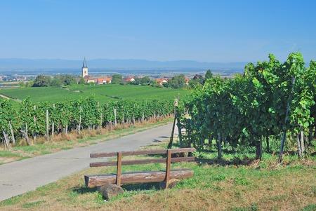 Die besten Bio-Weine Baden-Württembergs 2012