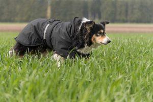 Ist Kleidung für Hunde sinnvoll oder nicht?