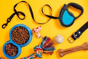 Halsband, Hundegeschirr, kurze Leine oder Flexileine?