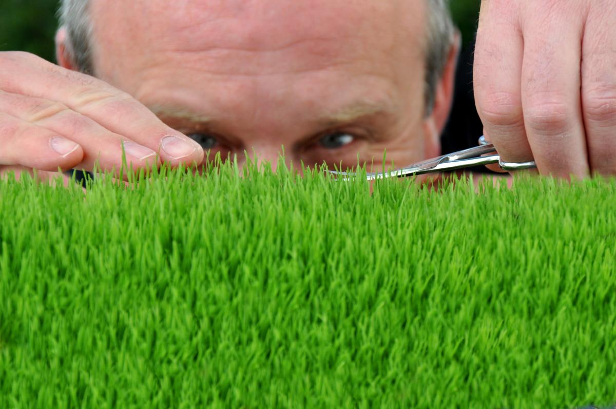 Was ist bei der Anlage einer Rasenfläche zu bedenken?