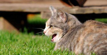 Sabina für reizbare Katzen mit Erkrankungen der Harnorgane