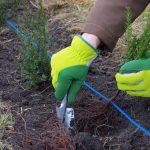 Hecken pflanzen – Schutz und Zierde Ihres Gartens