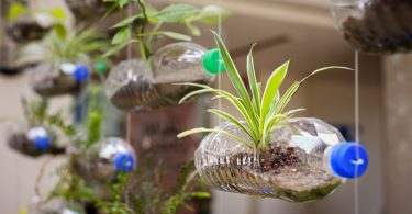 Einen Garten in der Flasche anlegen