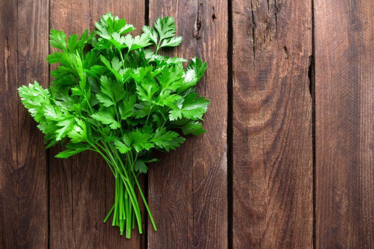 Petersilie pflanzen – Küchenkraut und Teufelspflanze