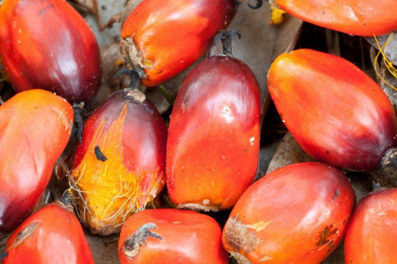 Schön problematisch: Vorsicht vor Palmöl in Kosmetika
